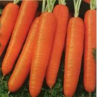Морковь Дарина /20 г/ *Moravoseed*