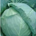 Капуста белокочанная Гелиос F 1 /2.500 семян/ *Moravoseed*