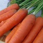 Морковь Анета F1 /50.000 семян/ *Moravoseed*