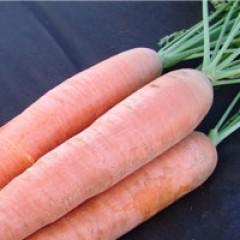 Морковь Афалон F1 /50.000 семян/ *Moravoseed*
