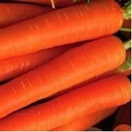 Морковь Берлика F1 /50.000 семян/ *Moravoseed*