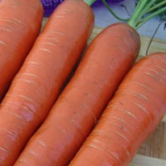 Морковь Кортина F1 /50.000 семян/ *Moravoseed*