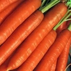 Морковь Кнота F1 /50.000 семян/ *Moravoseed*