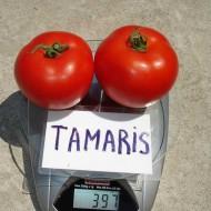 Томат Тамарис F1 /1.000 шт/ *Clause*