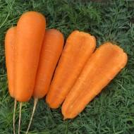Морковь Боливар F1 /100.000 шт/ *Clause*