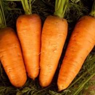 Морковь Болтекс /5 кг семян/ *Clause*
