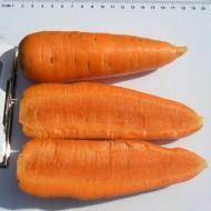 Морковь Шантане /0,5 кг семян/ *Clause*