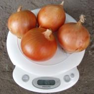 Лук Испаньол /0,5 кг семян/ *Clause*
