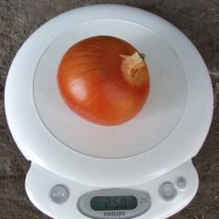 Лук Испаньол /5 кг семян/ *Clause*
