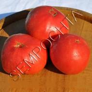 Томат Тодд Каунти Амишей (Todd County Amish) /20 семян/ *Частная коллекция*