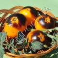 Томат Золотая Лесная Яблоня (Golden Crabapple) /20 семян/ *Частная коллекция*