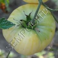Томат Сахар Белый /20 семян/ *Частная коллекция*