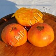 Томат Оранжевый Орангутан (Orange Orangutan) /20 семян/ *Частная коллекция*