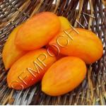 Томат Сладкий Крем (Sweet Cream) /20 семян/ *Частная коллекция*