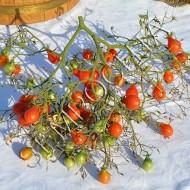Томат Кисть Красных Груш (Red Cluster Pear) /20 семян/ *Частная коллекция*