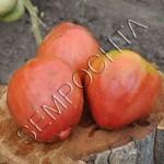 Томат Африканская Лиана (African Vining) /20 семян/ *Частная коллекция*