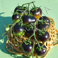 Томат Черника из Клакамаса (Clackamas Blueberry) /20 семян/ *Частная коллекция*