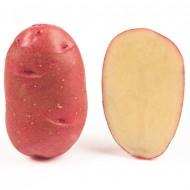 Картофель Торнадо (элита) /25 кг/