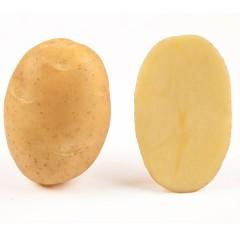 Картофель Бюррен /5 кг/