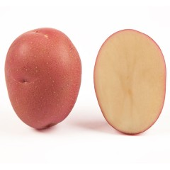 Картофель Кристина (элита) /5 кг/