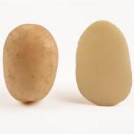 Картофель Саванна /5 кг/
