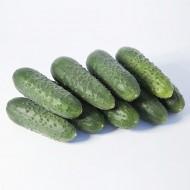 Огурец KS 70 F1 /50 семян/ *Kitano Seeds*