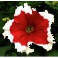Петуния Фрост F1 красная /1.000 семян/ *Syngenta Seeds*