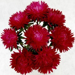 Астра Леди Коралл темно-красная /1.000 семян/ *Satimex*