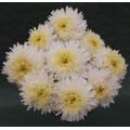 Астра Шанхайская Роза белая /1.000 семян/ *Satimex*