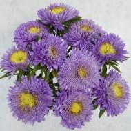 Астра Шанхайская Роза голубая /1.000 семян/ *Satimex*