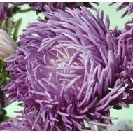 Астра Ювель фиолетовая /1.000 семян/ *Satimex*