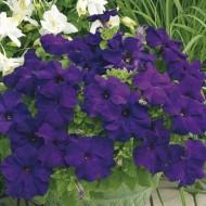 Петуния Шторм F1 синяя /1.000 семян/ *Syngenta*