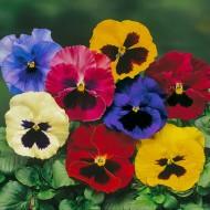 Виола витроока Дельта F1 смесь с глазком /100 семян/ *Syngenta Seeds*
