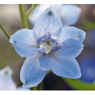 Дельфиниум Магический фонтан голубой с белым глазком /200 семян/ *Benary*