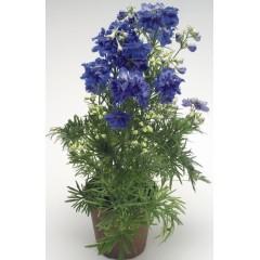 Дельфиниум Саммер темно-синий /100 семян/ *Benary*