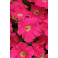 Петуния Дримс F1 розовая /1.000 семян/ *Pan American*