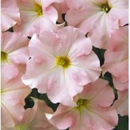 Петуния Дримс F1 яблуневый цвет /1.000 семян/ *Pan American*