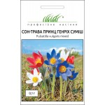 Сон-трава Принц Генрих /0,1 г/ *Профессиональные семена*