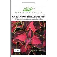 Колеус Чоколейт Коверед Чери /5 семян/ *Профессиональные семена*