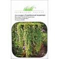Дихондра Серебряный водопад /5 семян/ *Профессиональные семена*