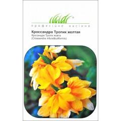 Кроссандра Тропик желтая /4 семечка/ *Профессиональные семена*