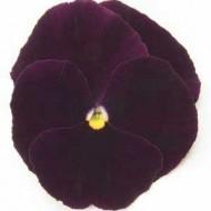 Виола Матрикс F1 темно- пурпурная /100 семян/ *Pan American*