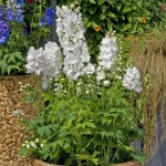 Дельфиниум Эскалибур белый /100 семян/ *Syngenta Seeds*