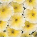 Петуния Мираж F1 желтая /1.000 семян/ *Pan American*