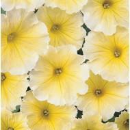 Петуния карликовая мультифлора Мираж F1 желтая /1.000 семян/ *Pan American*
