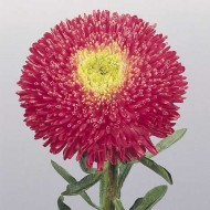 Астра китайская Принцеса Бенари ярко-розовая /1.000 семян/ *Benary*