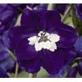 Дельфиниум Магический фонтан темно-синий с белым глазком /200 семян/ *Benary*