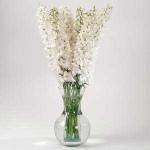 Дельфиниум махровый Гардиан F1 белый /100 семян/ *Pan American*