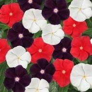 Катарантус каскадный Джеймс Джелис смесь (черный, белый, красный) /100 семян/ *Pan American*