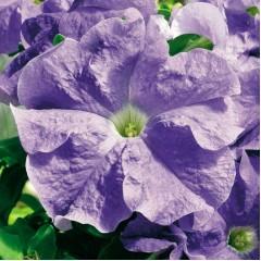Петуния Ультра F1 небесно-синяя /1.000 семян/ *Syngenta Seeds*